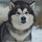 ourdogs_hades_2