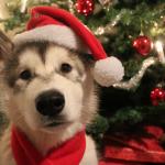 kenai the christmas elf