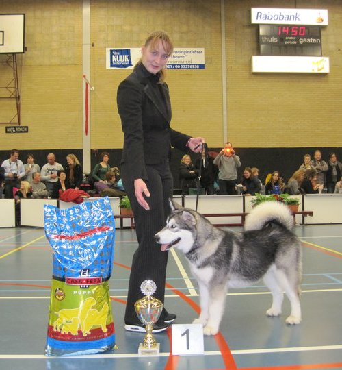 Pink (Marahootay Desert Orchid) wins best puppy in show