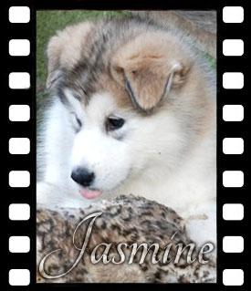 jasmine-filmstrip