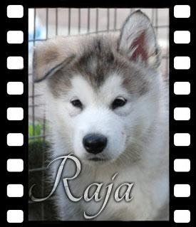 raja-filmstrip
