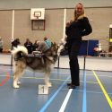 Pink wins the Open Dog Show at Waalwijk