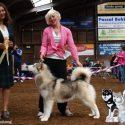 Mirage wins best puppy in breed